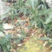 http://archivelab.co.kr/kmemory/GM00033143.jpg