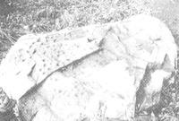 지석묘 (남정리)