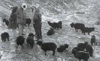 모란장:복개 전의 풍경 1986년 #2