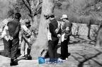 산림청 시범식수 ; 성남시 금곡동 ; 1979.03.21: