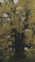 남양주군 나무 : 은행나무