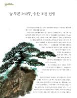 늘 푸른 소나무, 송산 조견 선생