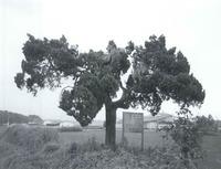 항나무(서경1리)