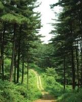 축령백림 전경