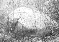지석묘 (소정리)