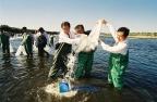 임진강 어족자원 조성을 위한 물고기 방류