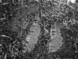 마산 고현리 공룡발자국